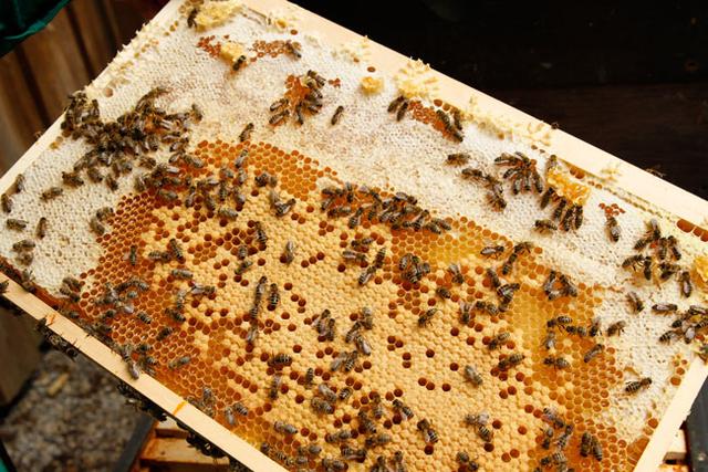 Am Honigkranz kann die Leistung abgelesen werden