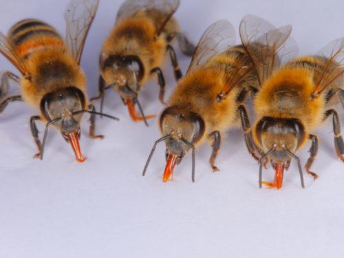 Bienen Füttern