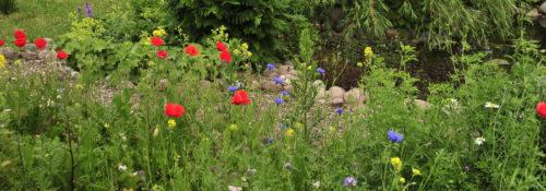 Ein bunter Blumengarten