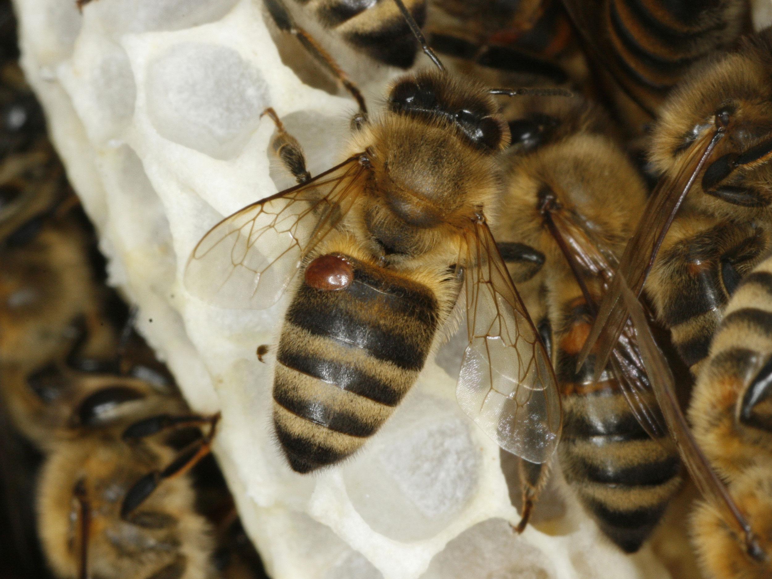 Mittel Gegen Bienen