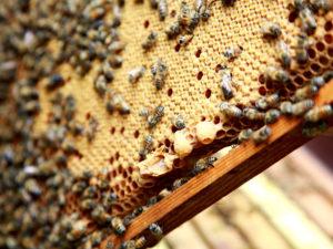 April bienenvölker erweitern
