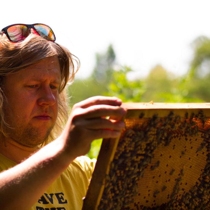 Kunde Deutsches Bienenjournal