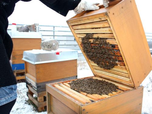 Wintertraube: Winterbehandlung für Bienen