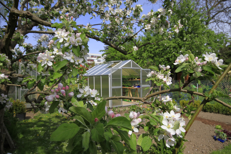 Bienenweide im Mai: Apfel
