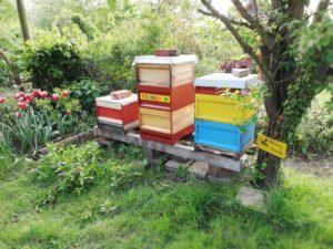 Kindergartenimkerei mit drei Bienenvölkern.