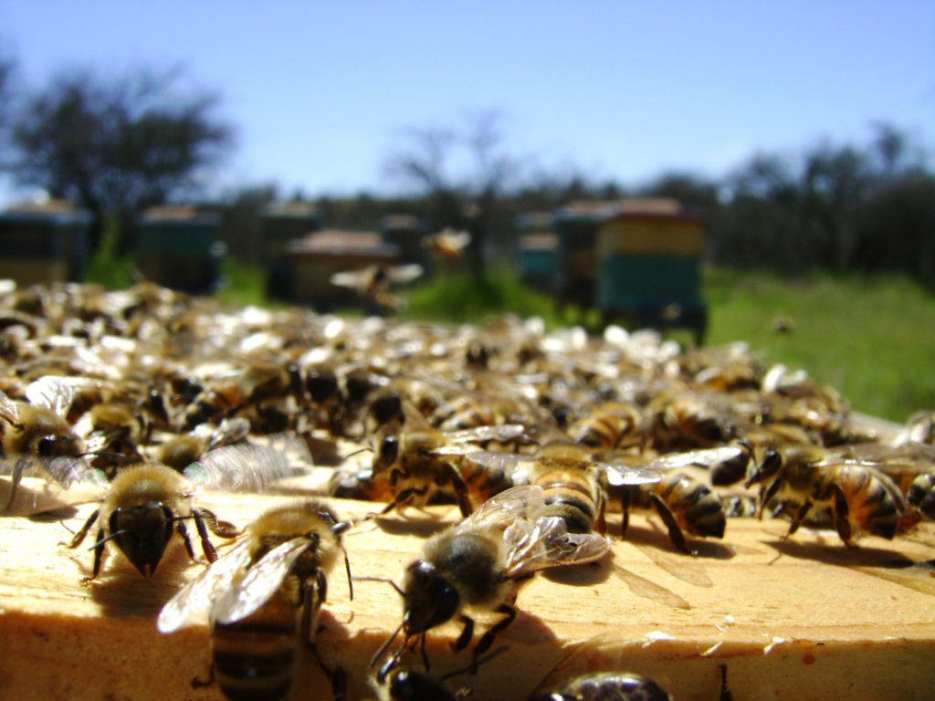 Leserreise Rumänien Bienen