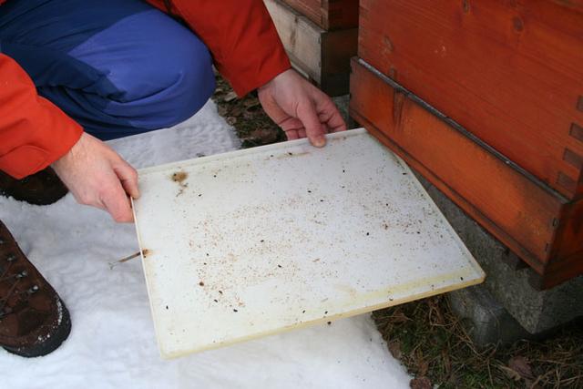 Kontrolle auf Varroabefall in den Monatshinweisen November