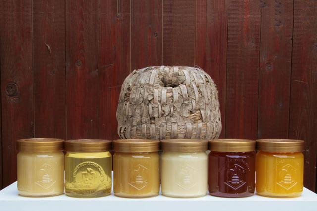 Monatshinweise Oktober: Honigqualitäten der verschiedenen Honigsorten