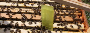 Zusatzkäfig für die Bienenkönigin