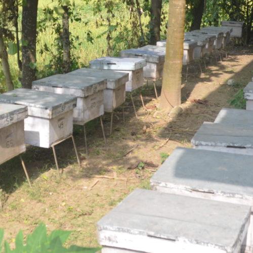 Bienenstand eines Berufsimkers in Chitwan