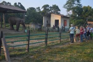 In der Aufzuchtstation werden die Elefanten abends zum Fressen ins Zentrum gebracht.
