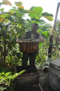 Imker Prakash Poudel zeigt uns sein Volk von Apis cerana im Stabilbau