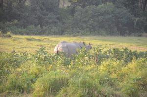 Unerwarteter Anblick: Auf dem Weg zur Aufzuchtstation für Elefanten erspähen wir ein wildes Nashorn auf der Wiese.