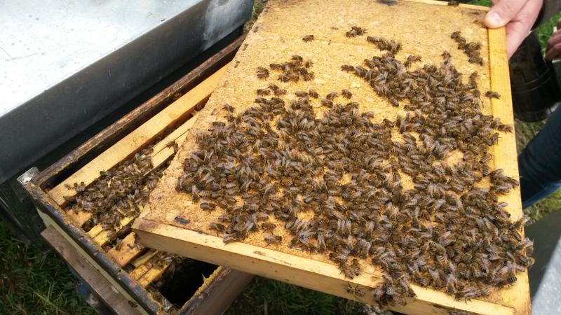 Bienenstock Wärmedämmung