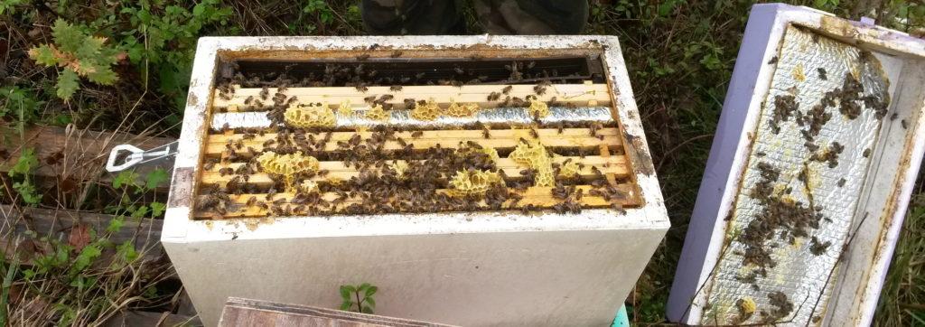 Wärmedämmung Bienenstock
