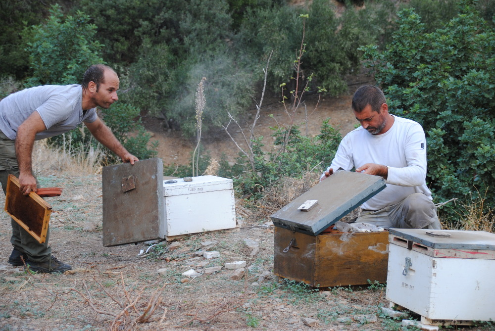 Imkerei auf Kreta: Bienenstand von Feuerwehrmann Manos