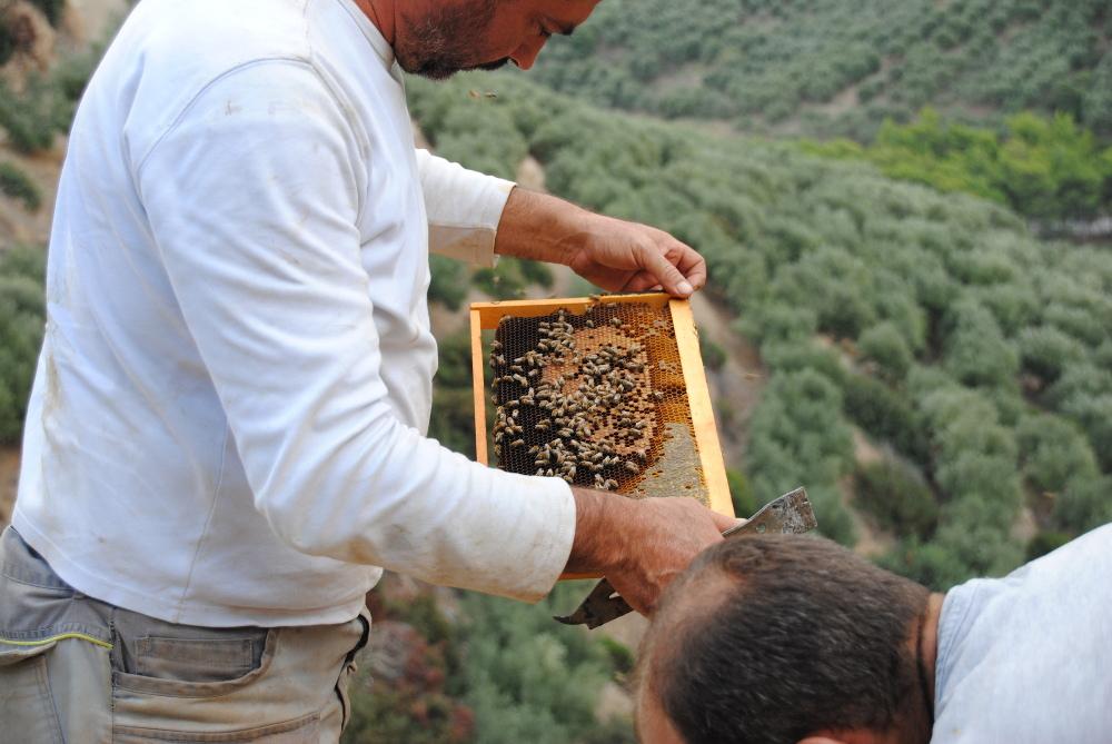 Imkerei auf Kreta: Keine einheimische Bienenrasse