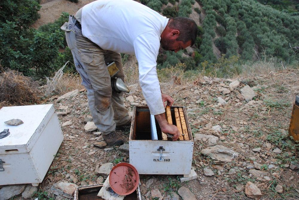 Imkerei auf Kreta: kleine Völker