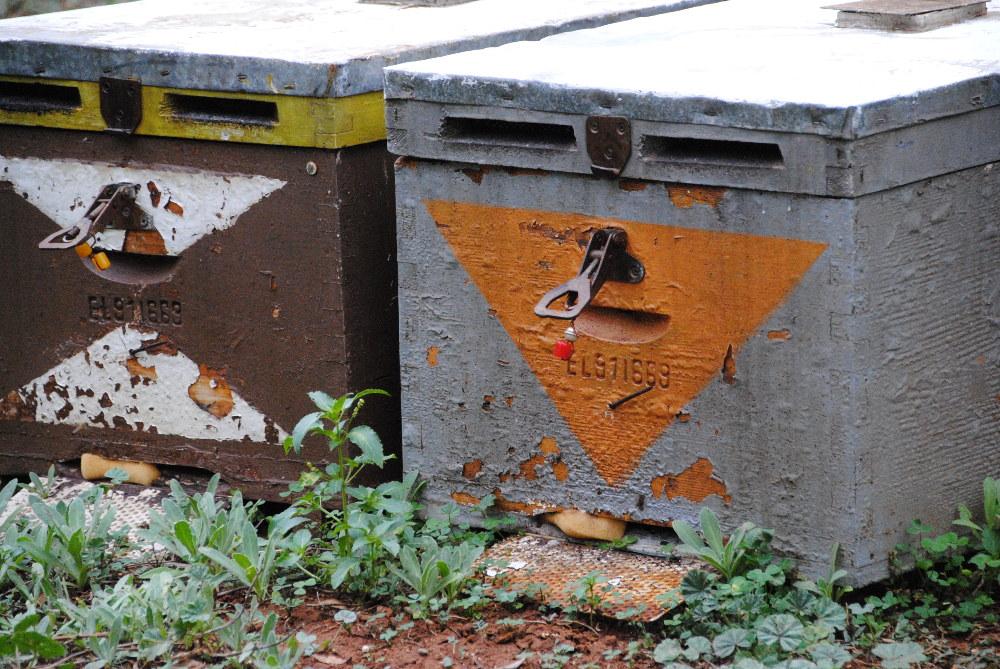 Imkerei auf Kreta: Langstrothmaß