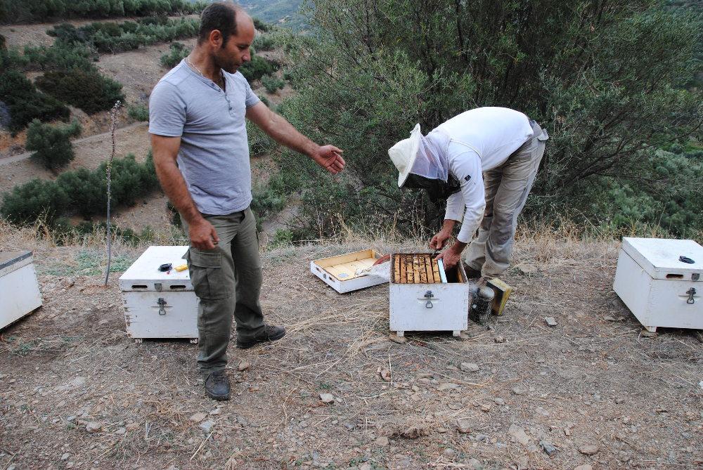 Imkerei auf Kreta: Überwintern auf sechs Waben