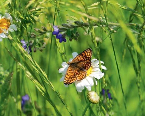 Landwirtschaft und Bienen