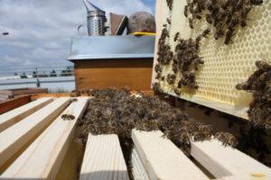 Bienen halten: Bienenstandort