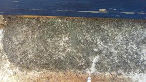 Frühjahrskontrolle bei den Verlagsbienen: Bodenschieber