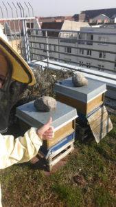 Frühjahrskontrolle bei den Verlagsbienen