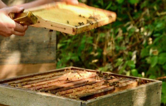 trockener Honig Foto: Simon Trocoli Castro