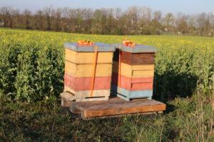 Wanderung mit den Bienen zur Corona-Zeit