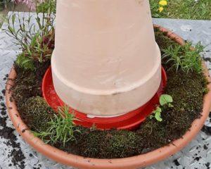 Bienentränke bauen: Unter dem Blumentopf verbirgt sich die Geflügeltränke. Foto: Martina Thiele