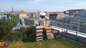 Verlagsbienen in Schwarmstimmung