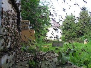 Die Bienen rasen vor dem Gewitter nach Hause.