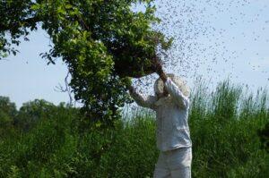 Bienen kaufen Schwarm