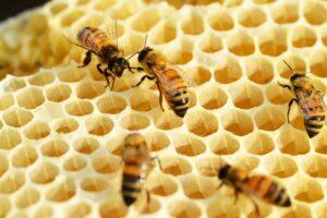 Honig Inhaltsstoffe Bienen