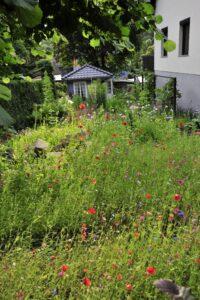 Blumenwiese für Gartenhäuschen