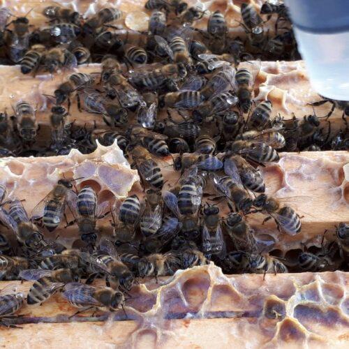 Winterbehandlung der Verlagsbienen