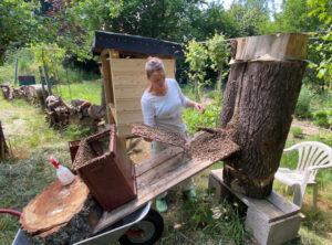 Naturwabenbau im Honigraum und Brutraum, Foto: Nicole Saturna