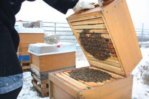Bienen sitzen in einer Wintertraube
