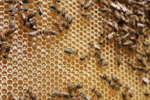 Wabenbau der Bienen in vielen Sechsecken aneinander.