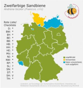 Wildbiene des Monats März, Zweifarbige Sandbiene, Grafik: Deutschland summt/Stiftung für Mensch und Umwelt