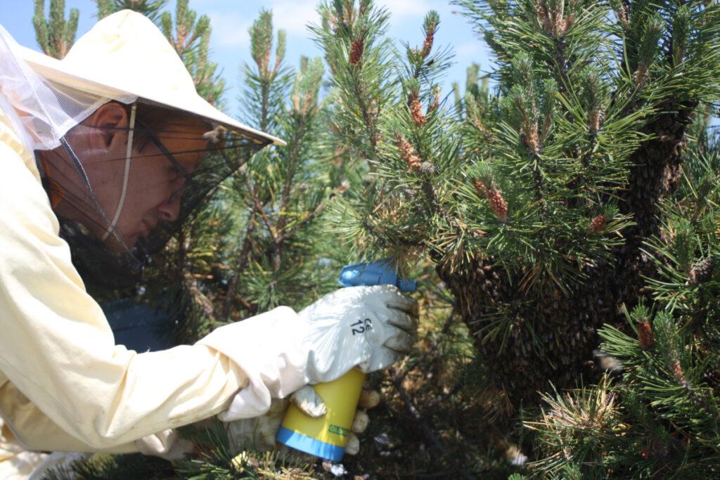 Tipps Schwarmfang - Bienen mit Wasser besprühen
