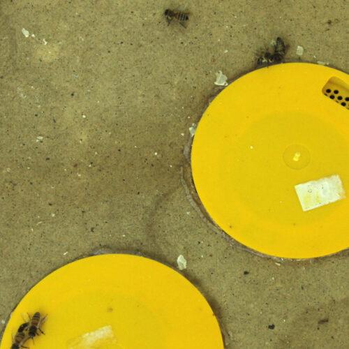 Bienenflucht - Foto: Sabine Rübensaat