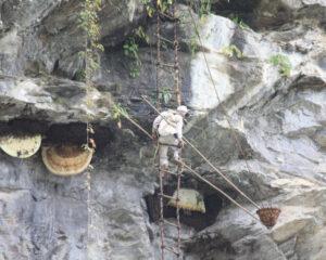 Honigjäger in Nepal - Honigjagd - Foto: Silke Beckedorf
