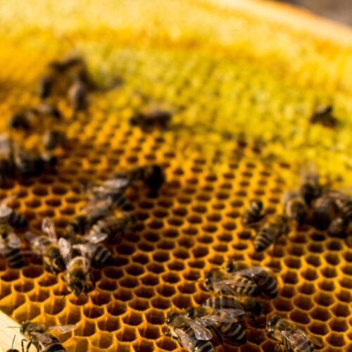 Rezept Bienenfutter - Foto: AdobeStock/Mareike