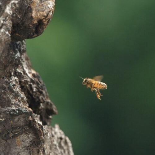 Tagebuch einer Biene - Foto: Taglichtmedia